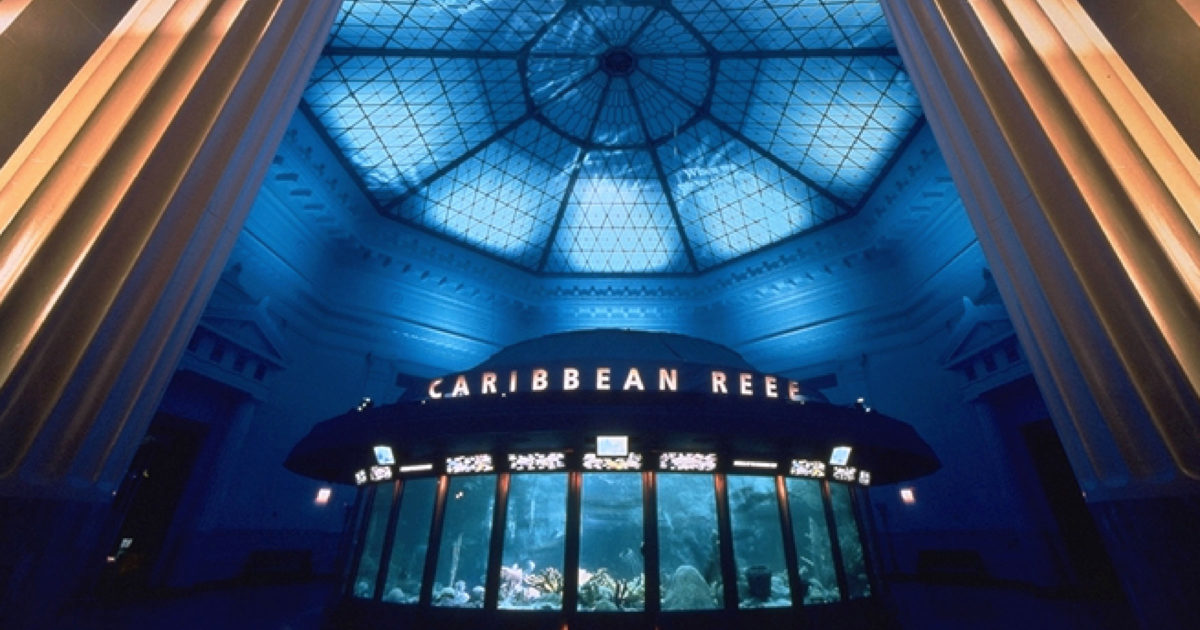 shedd aquarium caribbean reef exhibit schuler shook